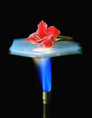 A flower protected from a flame by aerogel